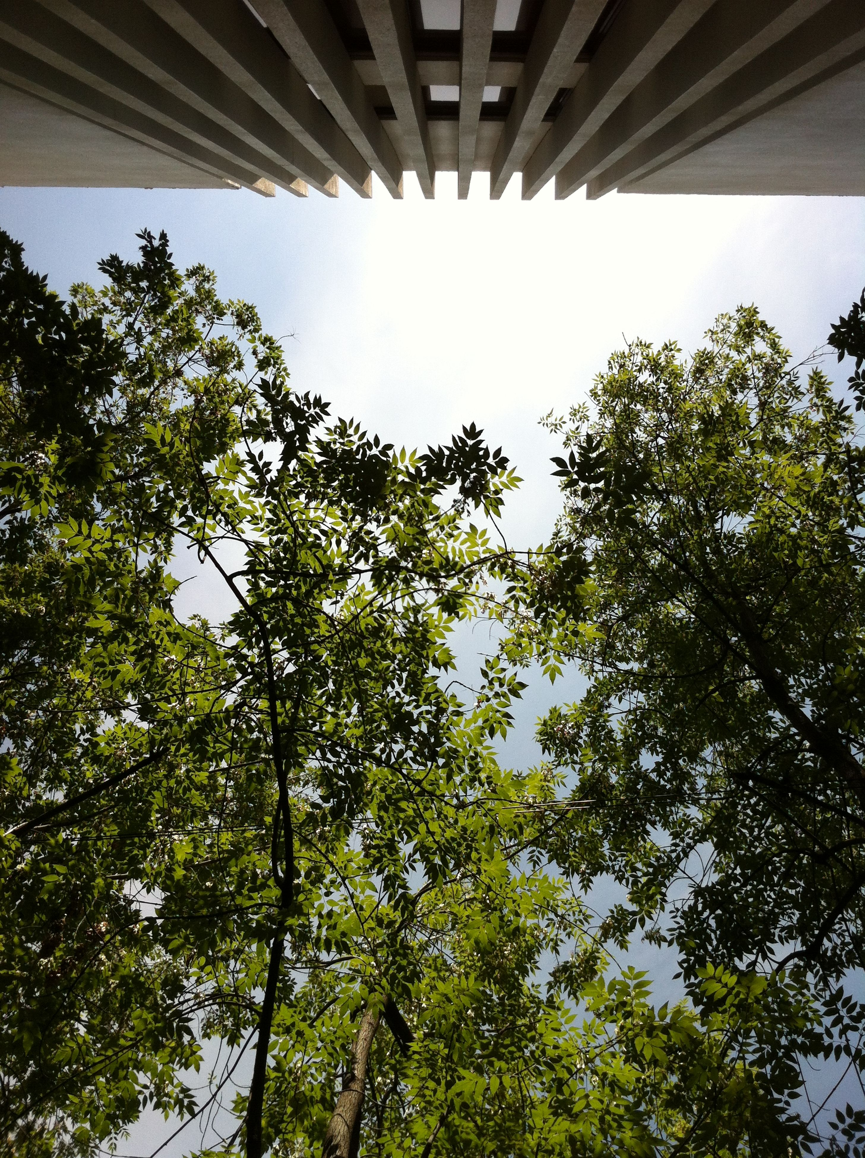 tree, low angle view, built structure, architecture, growth, building exterior, branch, sky, nature, clear sky, green color, day, no people, sunlight, outdoors, building, house, beauty in nature, tranquility, city