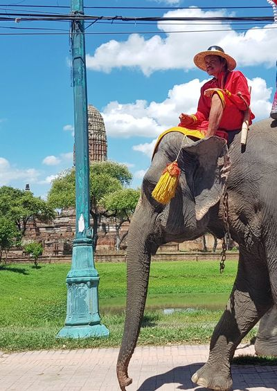 Snap A Stranger Thailand Elephant One Animal Sky Outdoors People
