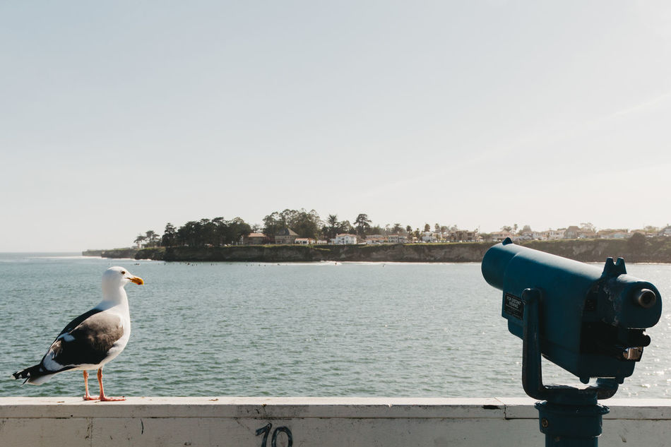 You couldn't ask for a more perfect moment. On the Santa Cruz Pier in California, a seagull sits by a telescope for sightseers as if it's admiring the coastal vibes as well. See more: Instagram.com/Lostboymemoirs www.LostBoyMemoirs.com Animal Themes Beauty In Nature Binoculars Bird California California Dreaming California Love Clear Sky Coastal Coastline Coin-operated Binoculars Day Nature No People Outdoors Retro Seagull Sky Tourism Tranquility Travel Tree Wall Wallpaper Water