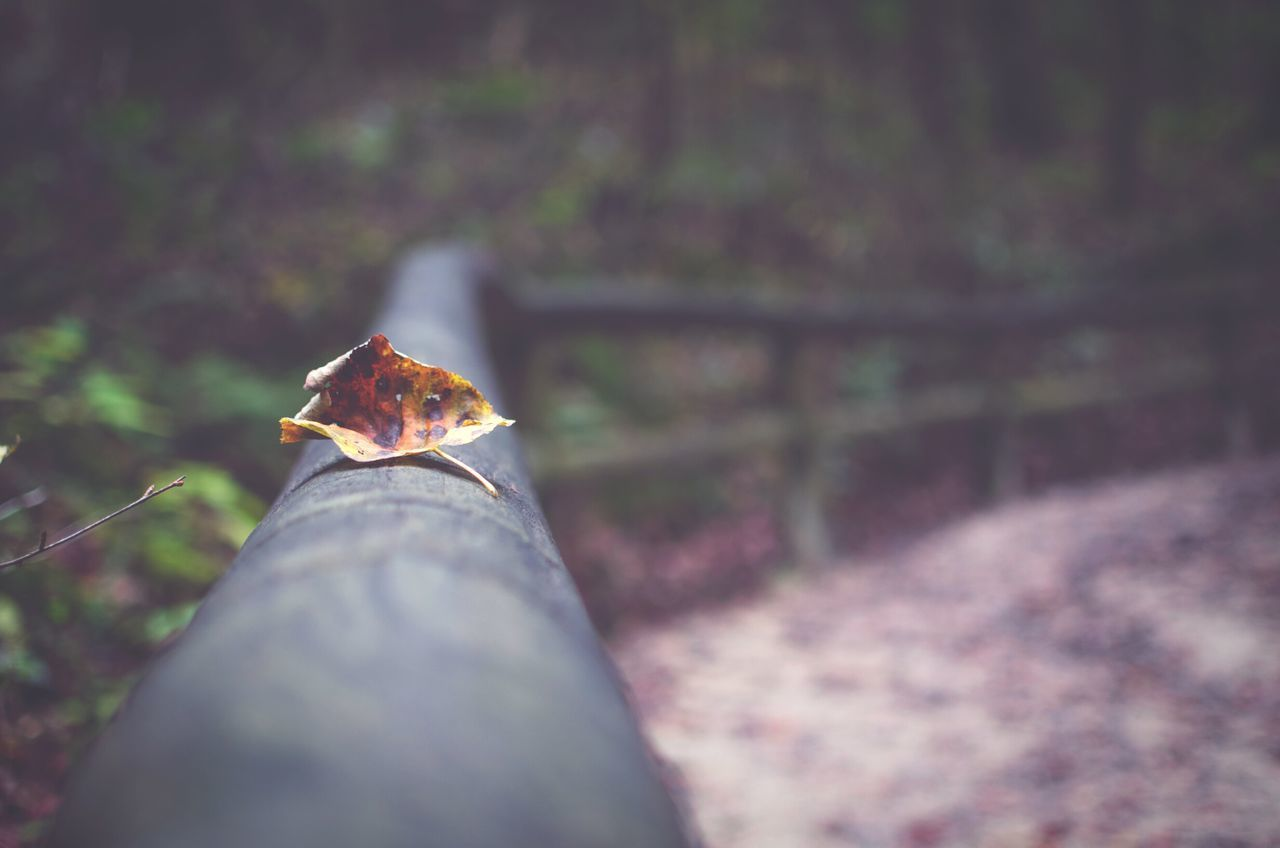 Lonely leaf Taking Photos Nature Nature_collection Nature Photography 👣 Naturelovers Nature Photography Naturelover Fall Beautiful Beautiful Nature Warm Nikon Photography DSLR Love Walking Around
