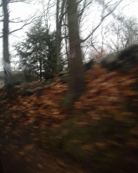 Fall Autumn Nature Trees Sky River Architecture Blackandwhite Outdoors Reflection Water Earth365 Travel Adventure Picsforautism Shanephotos Shanelehoux Wisetag Wisetagger