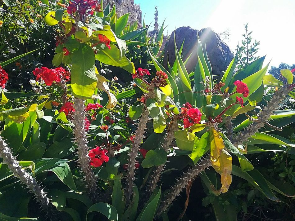 Excotic Flora Mediterranean  Plants SPAIN Sunny Day Colorful Redandgreen Blossoming  Iloveflowers