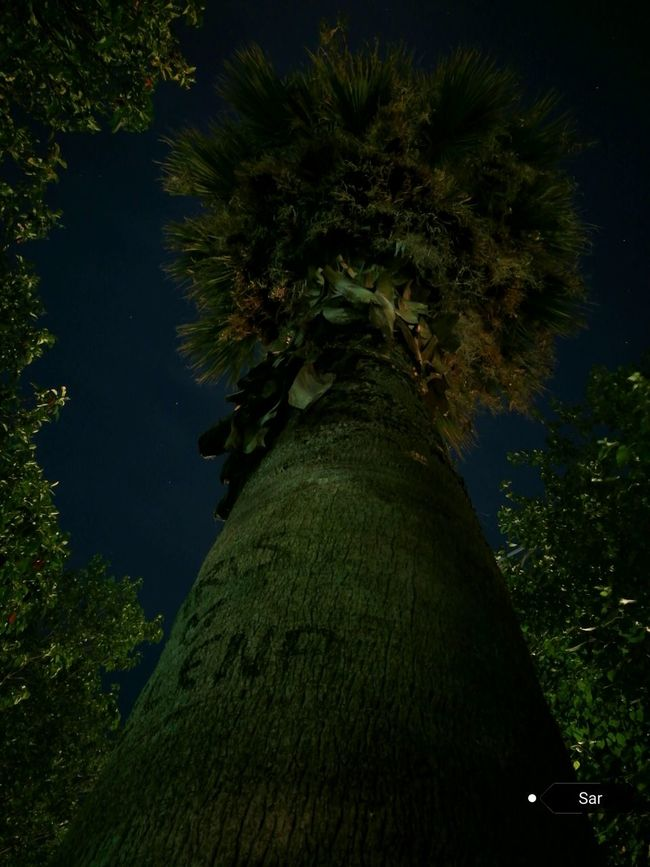 A Walk In The Park Tree Nature Green Color Beauty In Nature Palm Tree Sky Skylovers Sky And Trees Trees And Sky Outdoors P9 Huawei P9photography Nightshot Autoshot Greek Sky No Edits, No Filters Amateurphotography