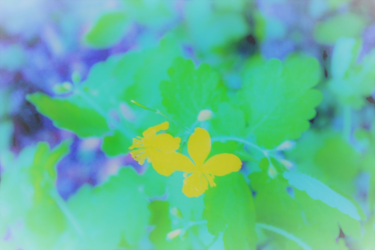 nature, leaf, beauty in nature, growth, fragility, plant, flower, yellow, no people, tranquility, outdoors, close-up, day, freshness
