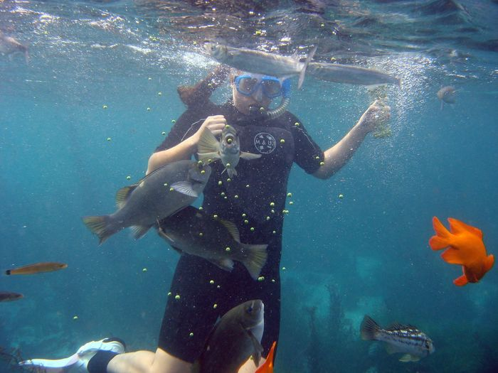 Snorkeling Snorkling Fish Feeding Girl Under Water Marine Life Underwater Photography