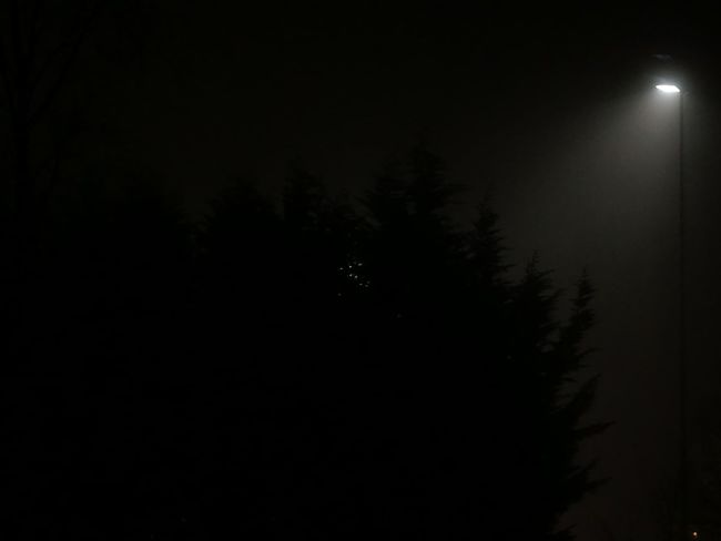 Tree Nature Beauty In Nature No People Night Cold Temperature Snow Outdoors Sky HuaweiP9 Eyeemphotography Cell Phone Photography Illuminated Silhouette Dark Light Fog Still Life Quiet Moments Psychological Shortestday Fear EyeEm Best Shots