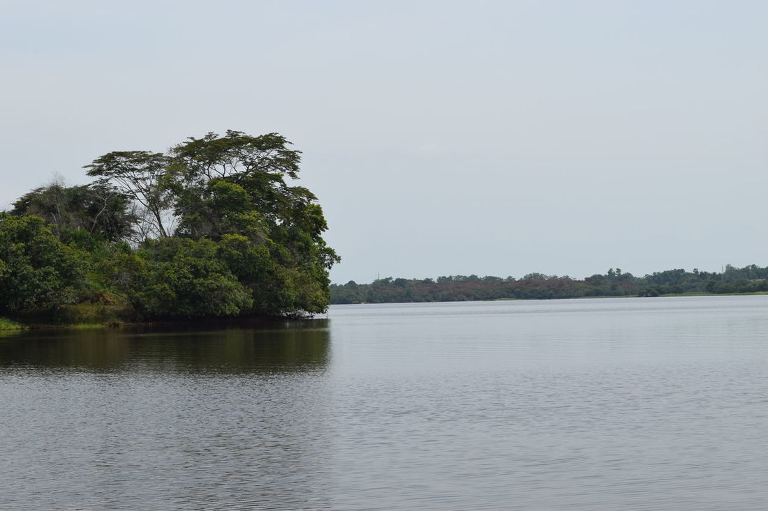 Water Reflection Tree Nature Lake No People Ciénaga Sky Outdoors Landscape Day