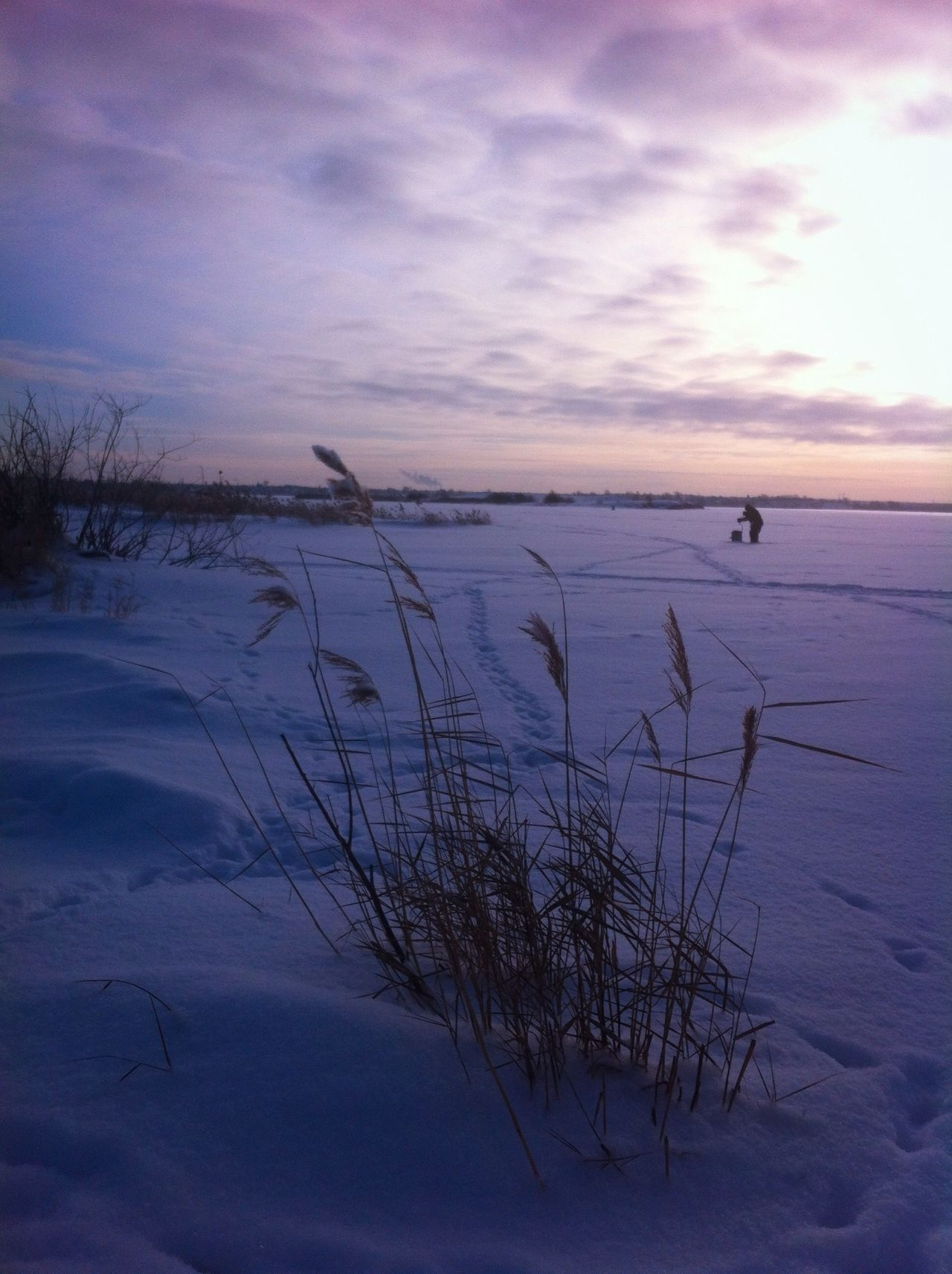 Reed Reeds Lake Snow Winter Wintertime Landscape Landscape_Collection Landscape_photography