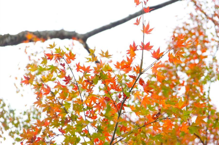 Kiyomizu-dera 清水寺 Capture The Moment 京都 日本 Japan Autumn Leaves KiyomizuTemple Fall Autumn Kyoto Garden