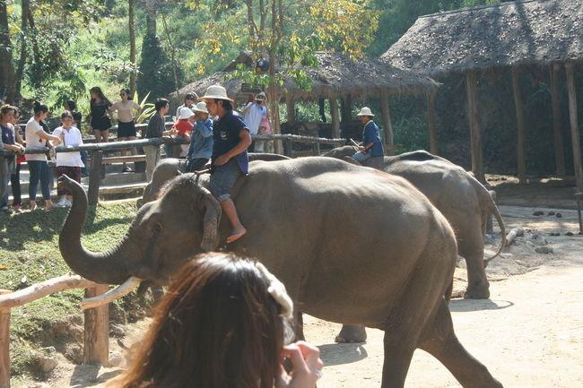 The elephant show Casual Clothing Day Elephant Herbivorous Horseback Riding Leisure Activity Lifestyles Mammal Outdoors Sunlight The Elephant Show Tree Working Animal