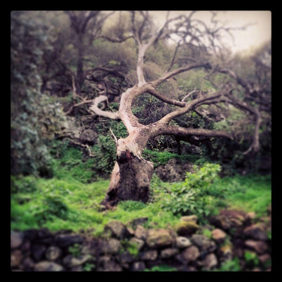 Barranco de los cernícalos Tree Camping Forest
