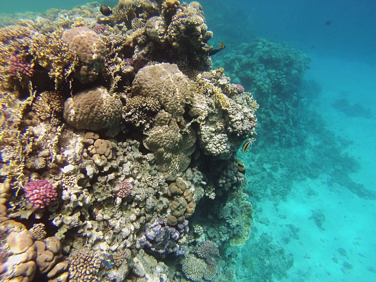 High Angle View Of Coral Growing In Sea