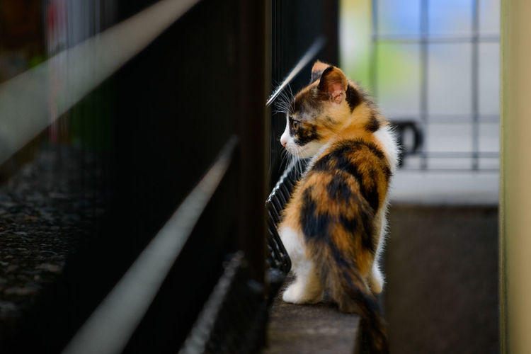 A little kitten eyeing the outside world. Animal Animal Themes Animals In The Wild Calico Cat Cats Cute Kitten Mammal No People One Animal Pets Selective Focus Stray Cat Tortoiseshell ねこ 三毛猫 猫