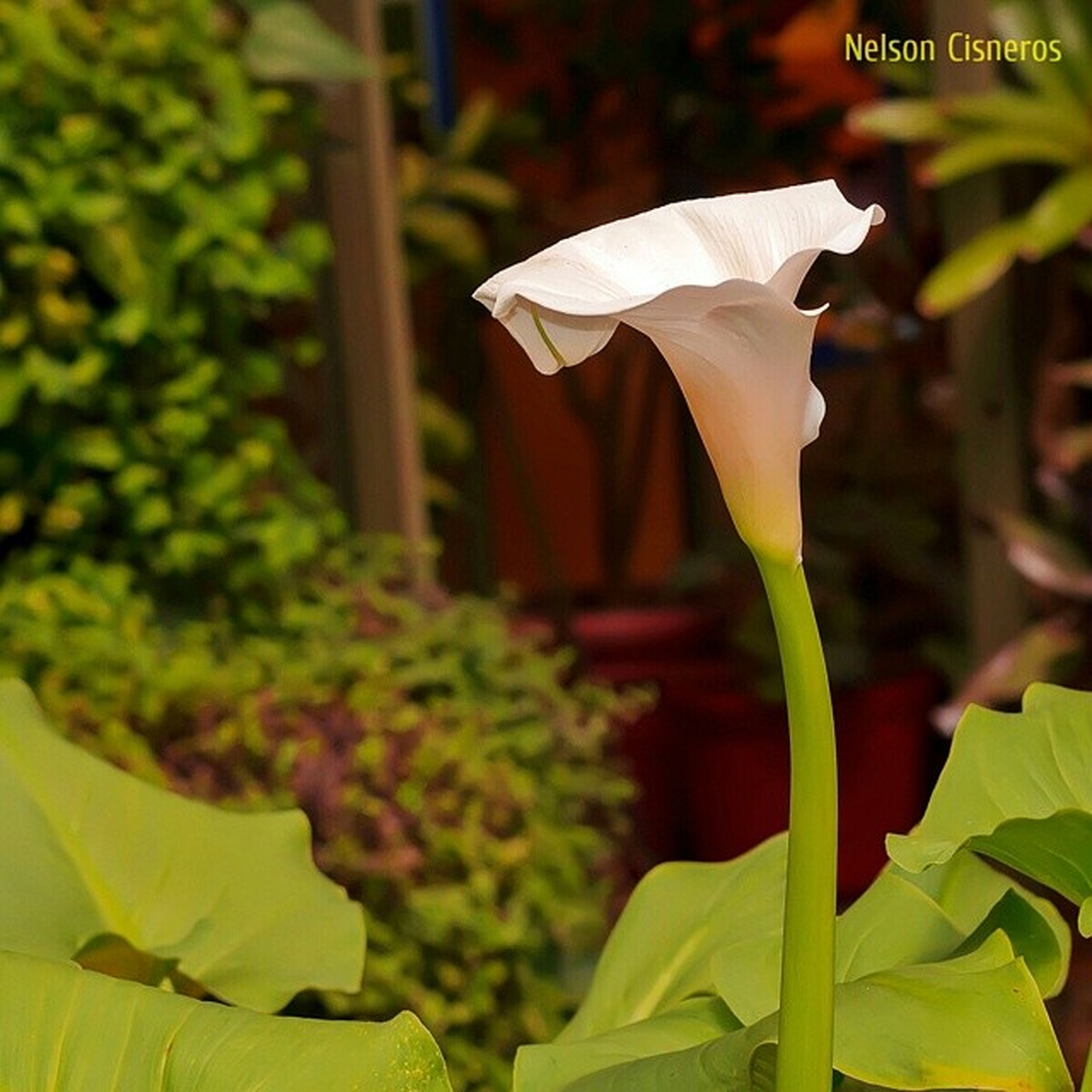 flower, freshness, close-up, focus on foreground, leaf, growth, plant, fragility, flower head, petal, nature, yellow, selective focus, outdoors, day, beauty in nature, tulip, text, no people, green color