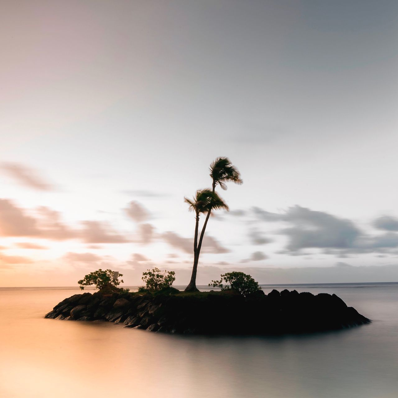 Palm Tree Sea Tree Nature Beach Sky Horizon Over Water No People Beauty In Nature Tranquility Scenics Tranquil Scene Water Sunset Outdoors Day Single Tree