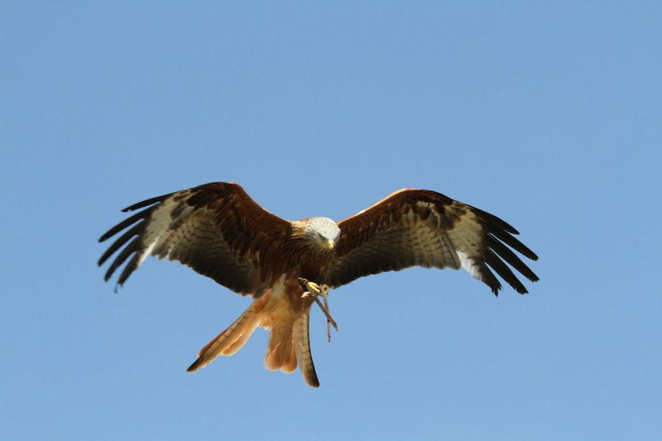 Beautiful stock photos of wings, Animal Themes, Animal Wing, Animals In The Wild, Bird