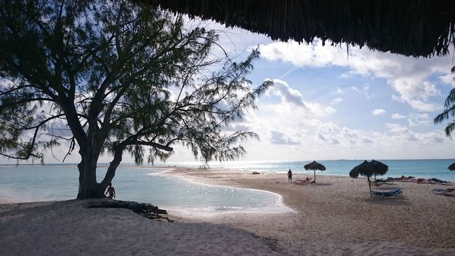 Beach Caribbean City Escape Great Times Idyllic Paradise Paradise Beach Peace And Quiet Quiet Sea Sea Sand Sun Sea Sand Tree Shore Tourism Tranquil Scene Tree Beach Tree Shadow On Water And Sand Tree Silhouette Vacation