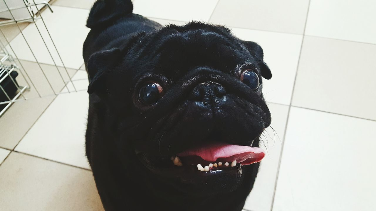 Dog Pets Animal Themes Day Black Color First Eyeem Photo