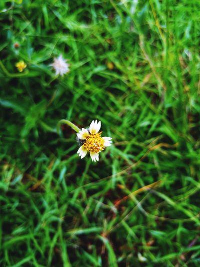 Flower Nature Flowerlovers