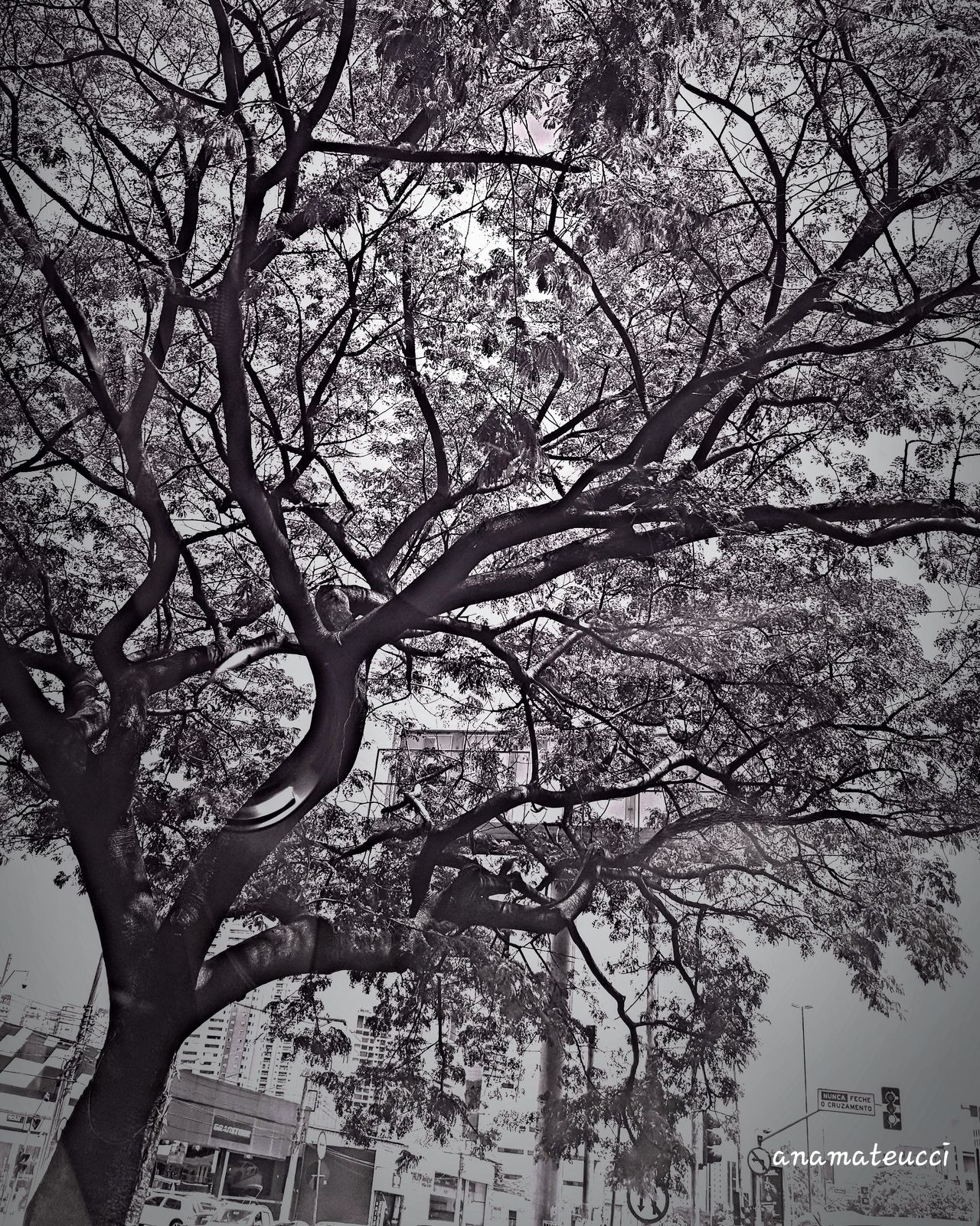 Tree Silhouette Tree_collection  LoveBW Eyeemphotography Mobgrafia