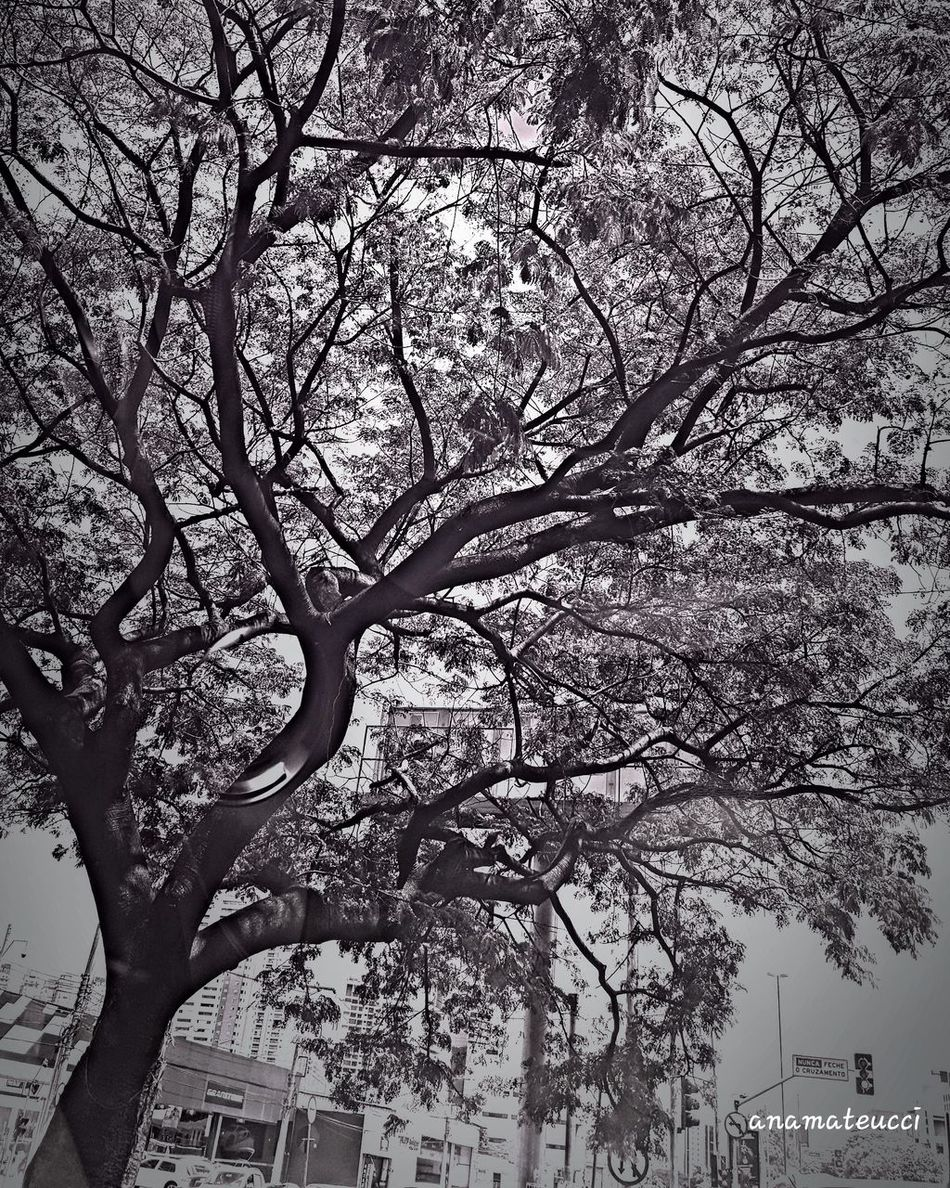Tree Silhouette Tree_collection  LoveBW Eyeemphotography Mobgrafia