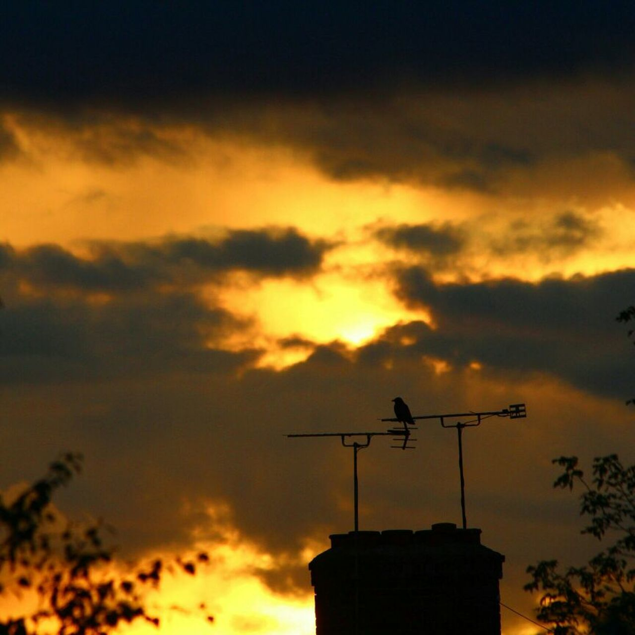 Aerial Antenna Architecture Beauty In Nature Bird Bird On A Aerial Bird On A Chimney Building Built Structure Chimney Cloud Cloud - Sky Clouds Cloudy Dramatic Sky Nature Orange Color Outdoors Scenics Sillouette Sky Sun Sunset Television Aerial Weather