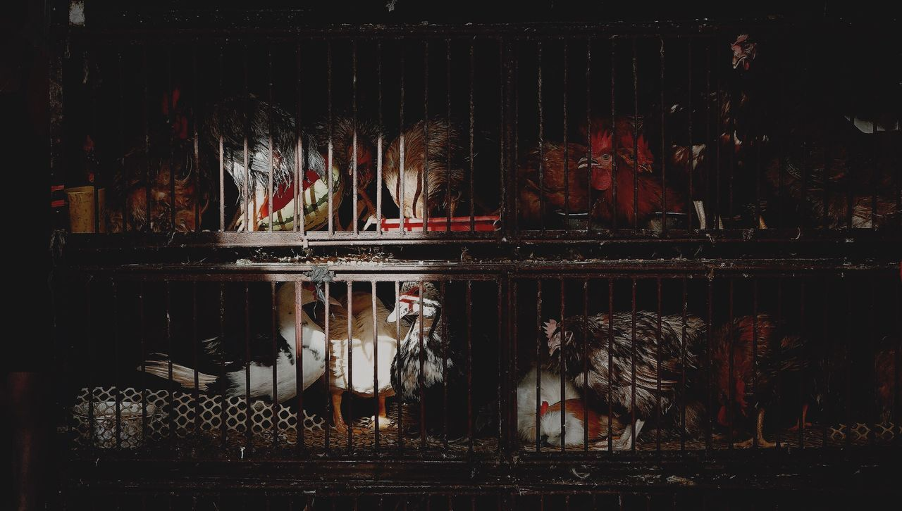 Beautiful stock photos of dark,  Abuse,  Animal Themes,  Animal Welfare,  Birdcage