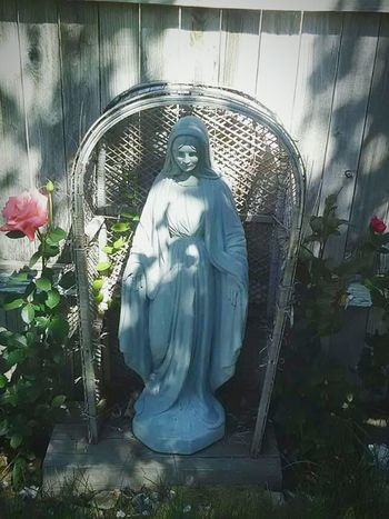 Mother Mary Flowers In Bloom No People Flowers,Plants & Garden Roses🌹 Religion