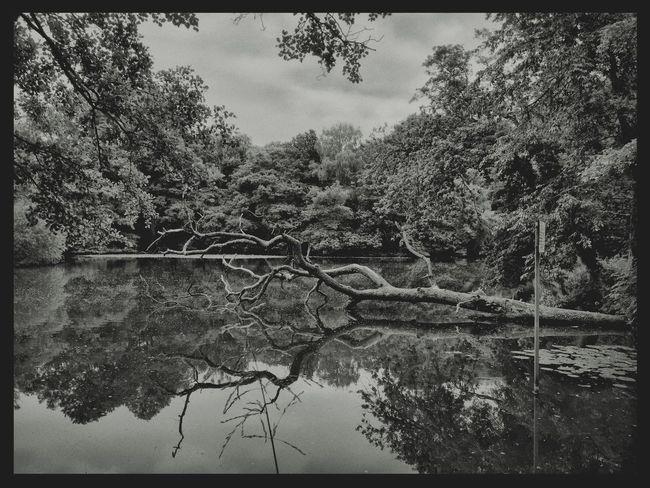 Nature_collection Tadaa Community Reflection Reflection_collection Lake Tree Dead Tree Inthewoods Atthelake