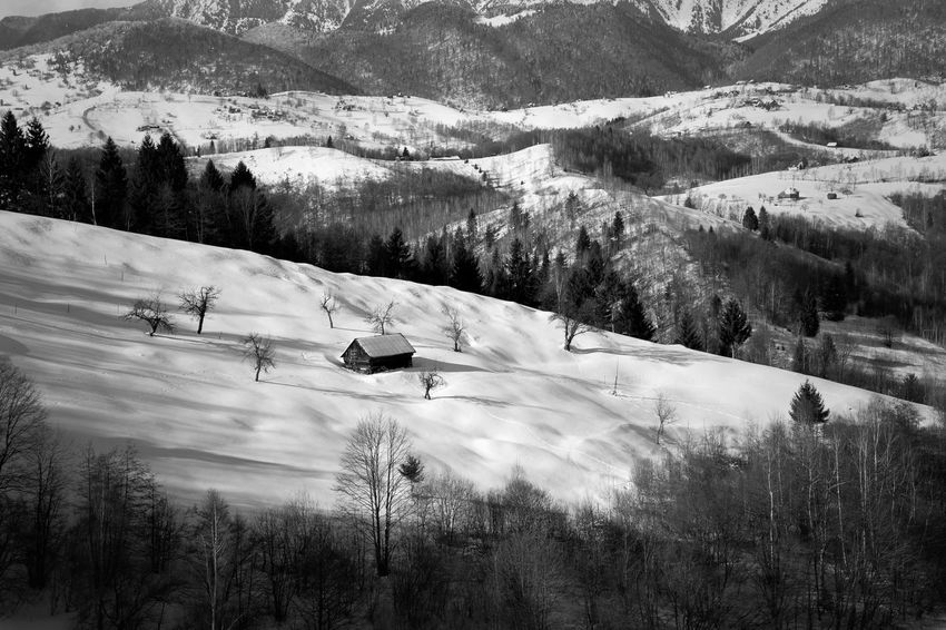 Beautiful winter landscape in Transylvania, Romania Brasov Romania Carpathians Romania Sunny Transylvania Winter Black And White Bran, Romania Countryside Landscape Monochrome Mountain Mountains Nature Outdoors Snow Sunset Tree Village White Winter