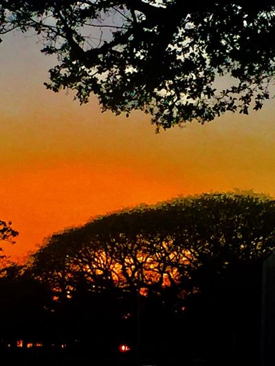Tree Silhouette Sunset Orange Color Growth No People Scenics Tranquil Scene Outdoors Sky Branch Day Tropics Tropical Tropical Island Island Island Of Oahu, Hawaii Oahu, Hawaii The Week On EyeEm Been There. Paint The Town Yellow Second Acts Oahu / Hawaii