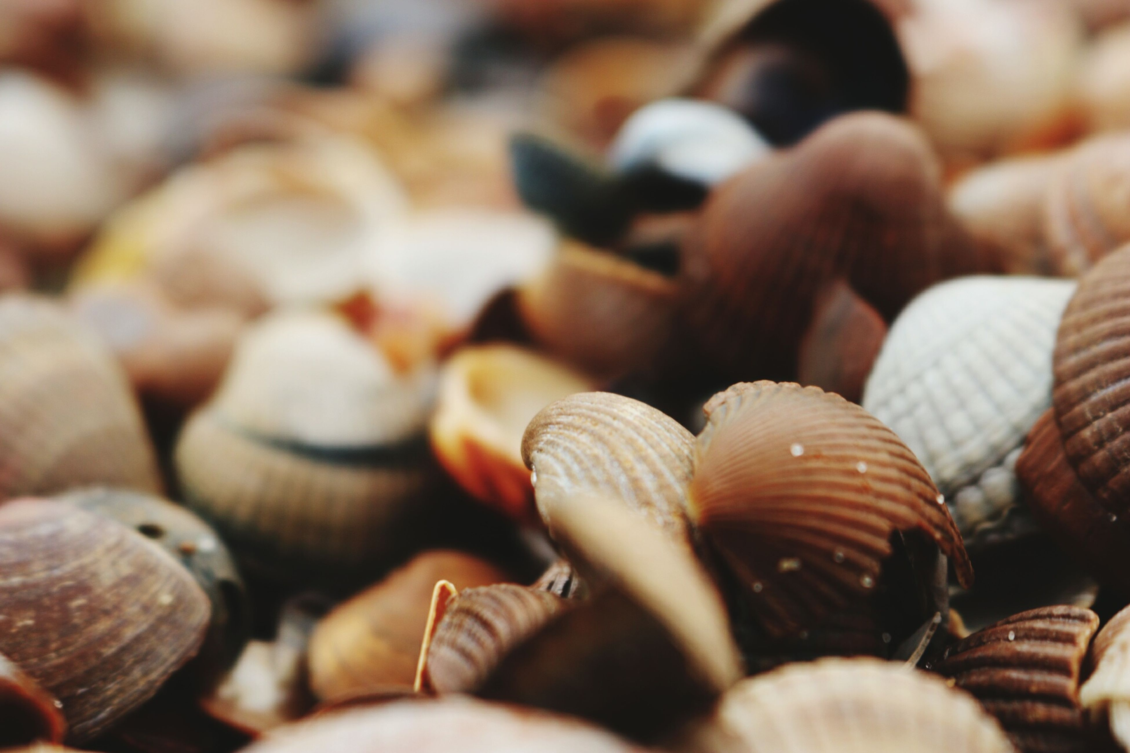seashell, close-up, selective focus, no people, large group of objects, day, nature, outdoors, animal themes