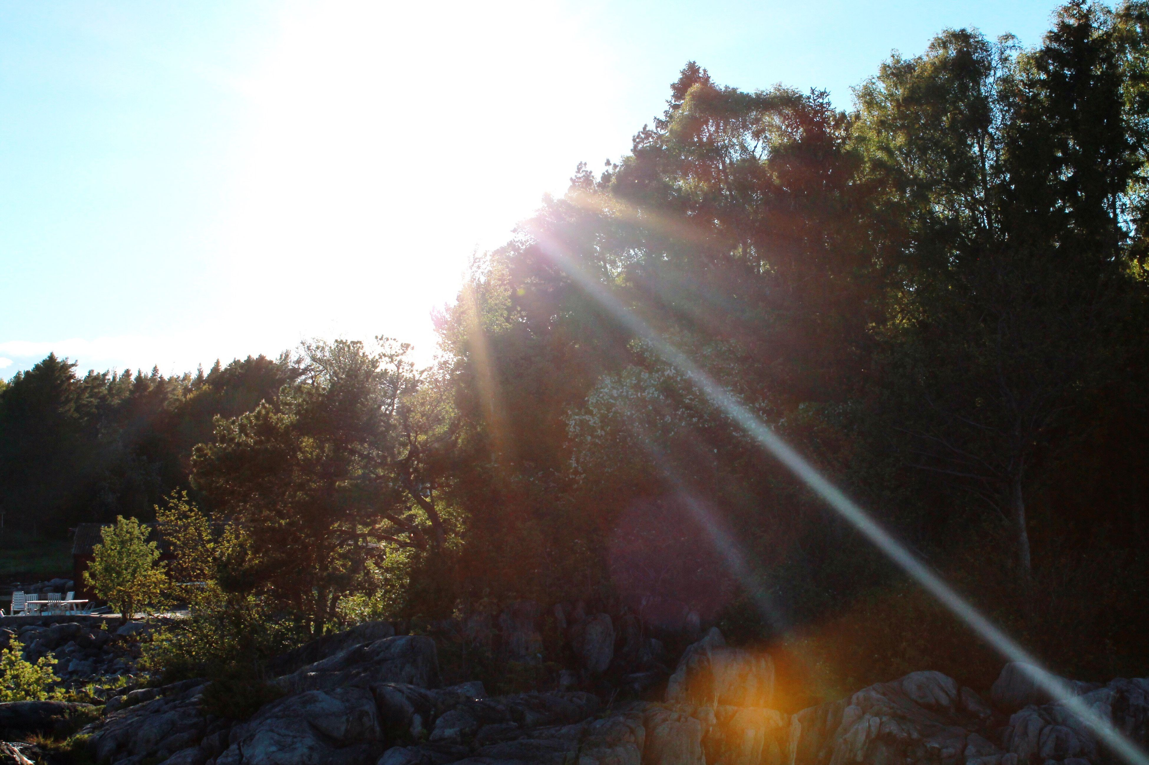 tree, sunlight, sunbeam, nature, growth, forest, sun, day, no people, outdoors, tranquility, beauty in nature, sky