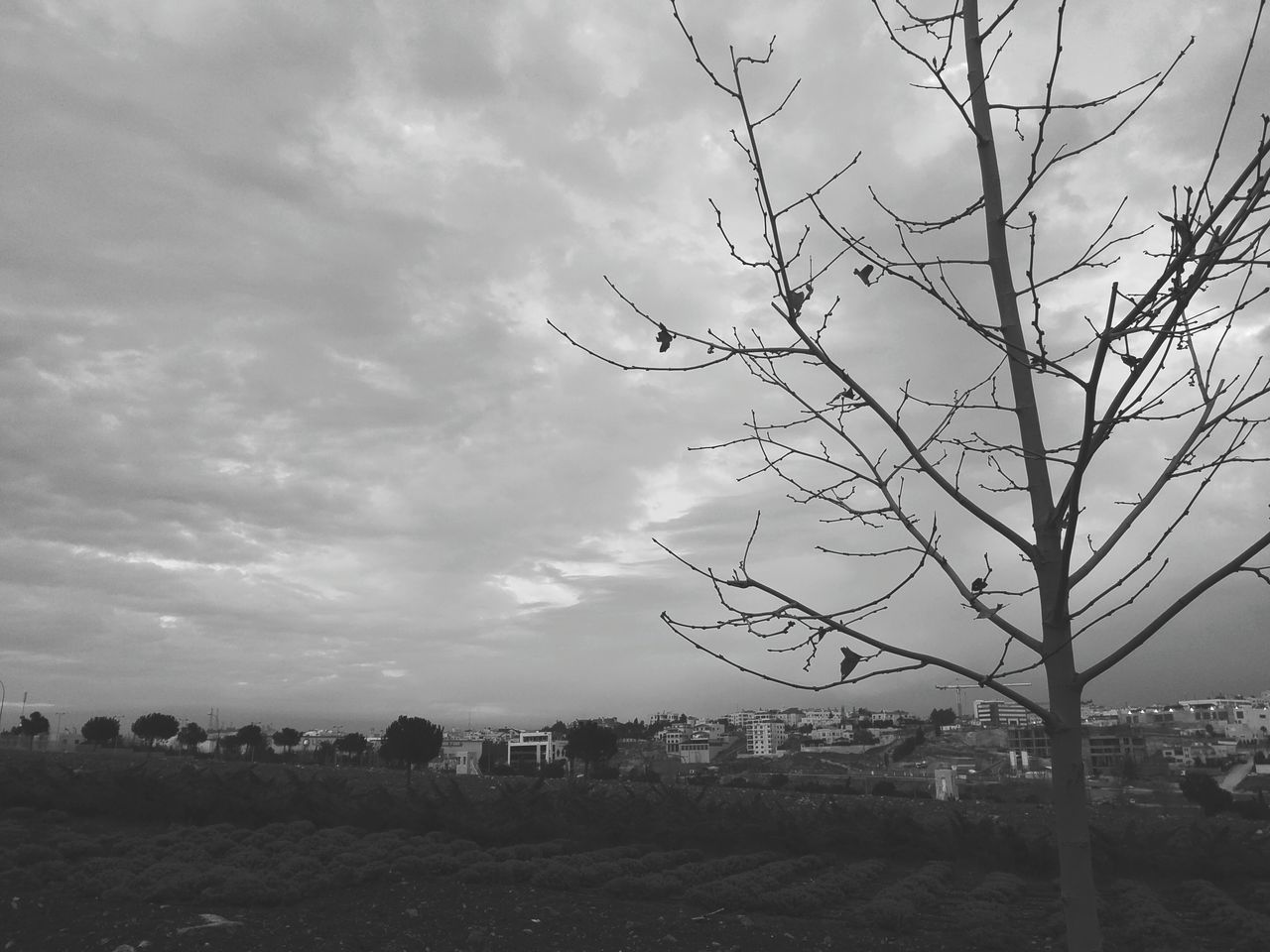 sky, cloud - sky, no people, outdoors, nature, day, bare tree, beauty in nature, landscape, scenics, tree