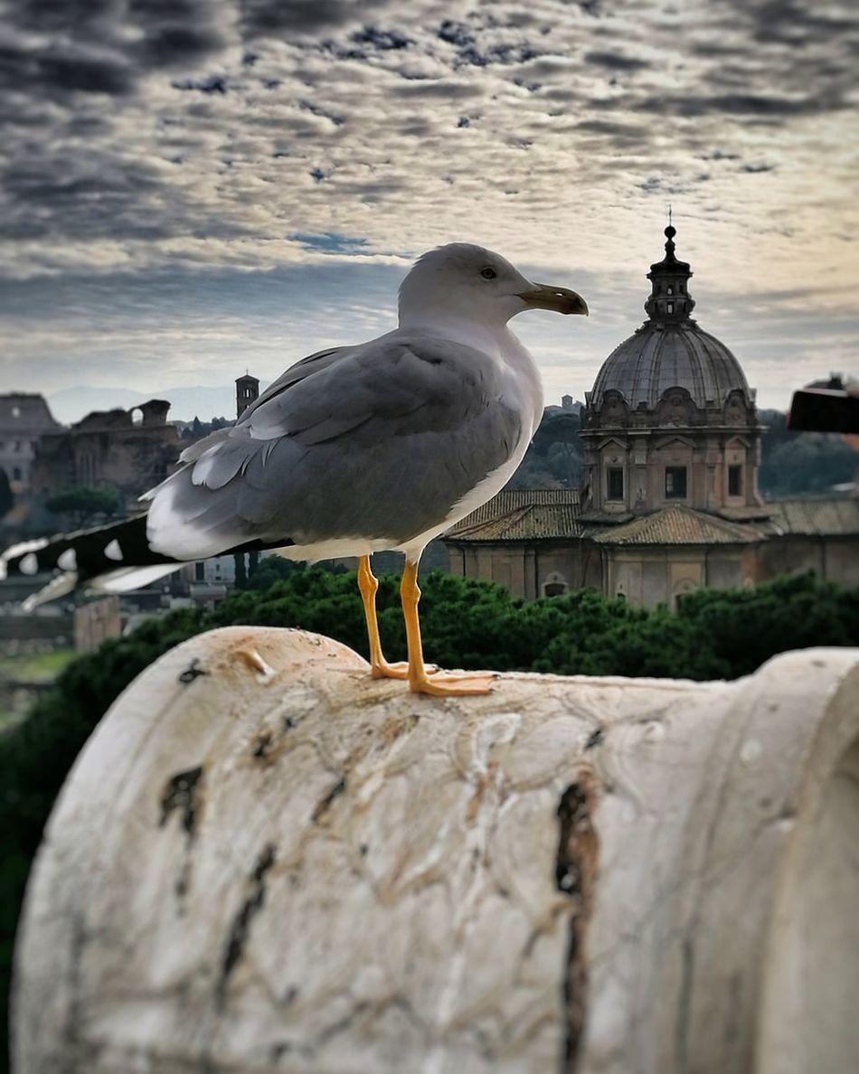 Roma cittàeterna Bird Animal Wildlife
