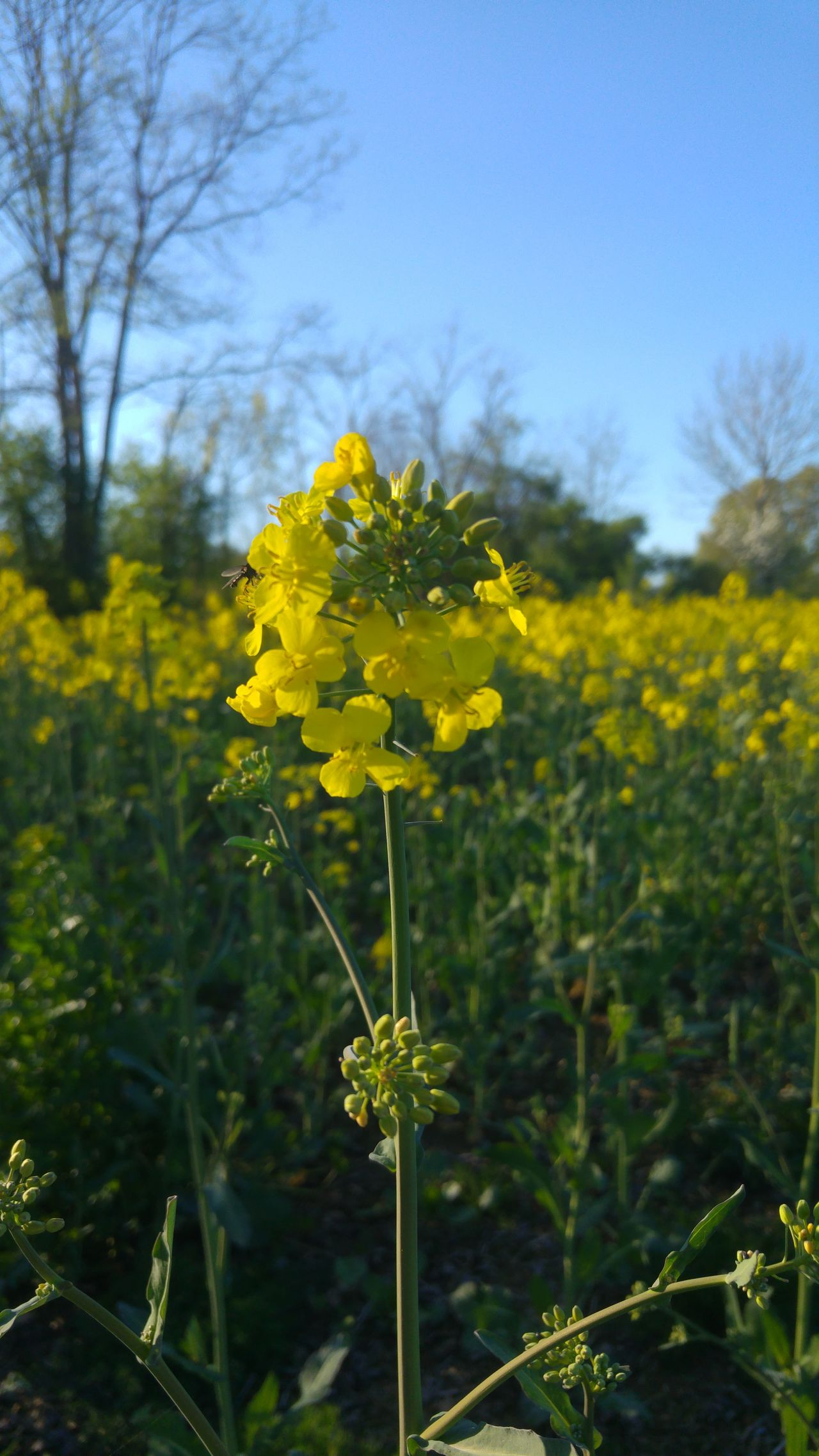 Day Nature Yellow Flower Beauty In Nature Springtime No People Outdoors Golden Hour