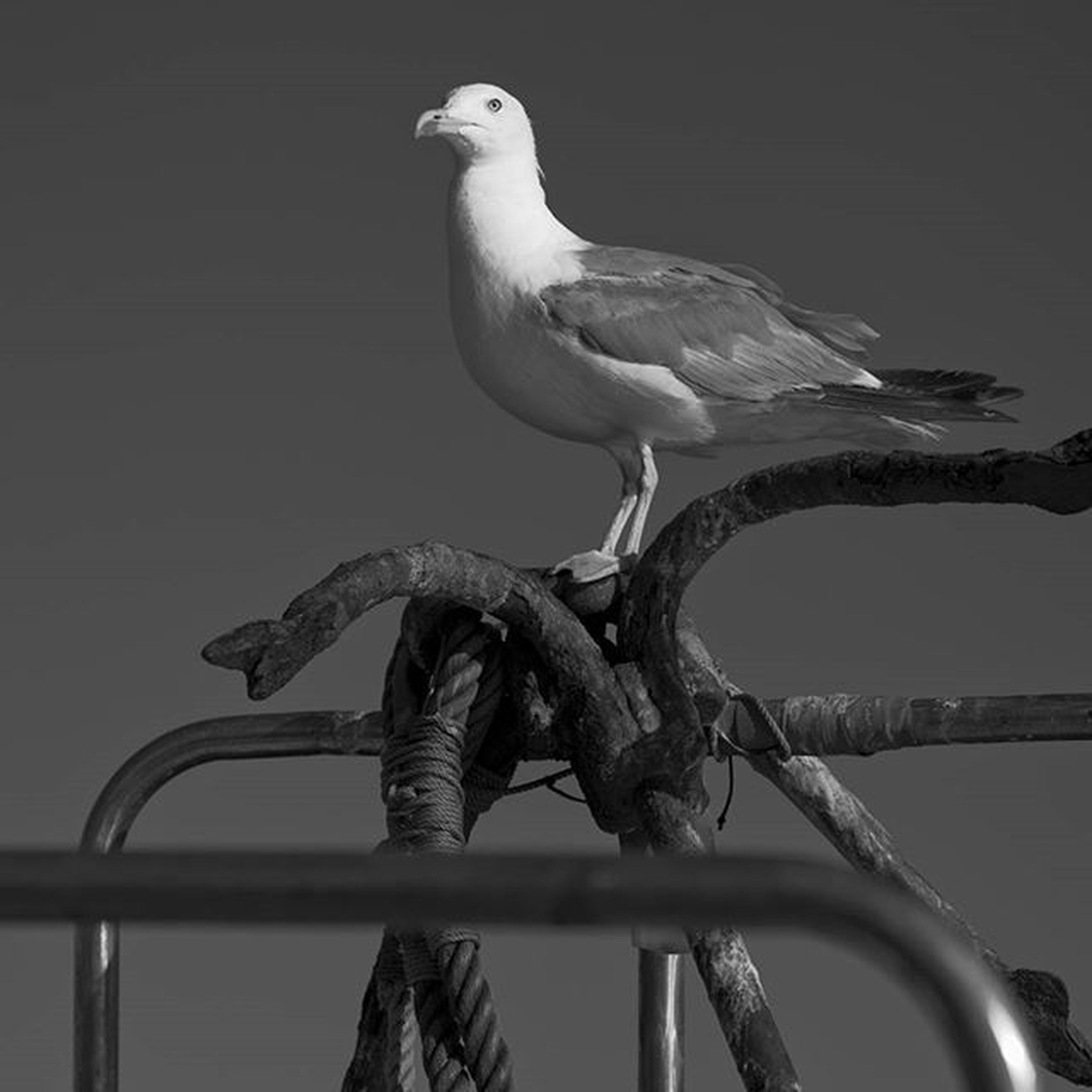 bird, animal themes, animals in the wild, wildlife, one animal, perching, beak, side view, seagull, full length, nature, zoology, low angle view, outdoors, focus on foreground, two animals, no people, avian, close-up, day