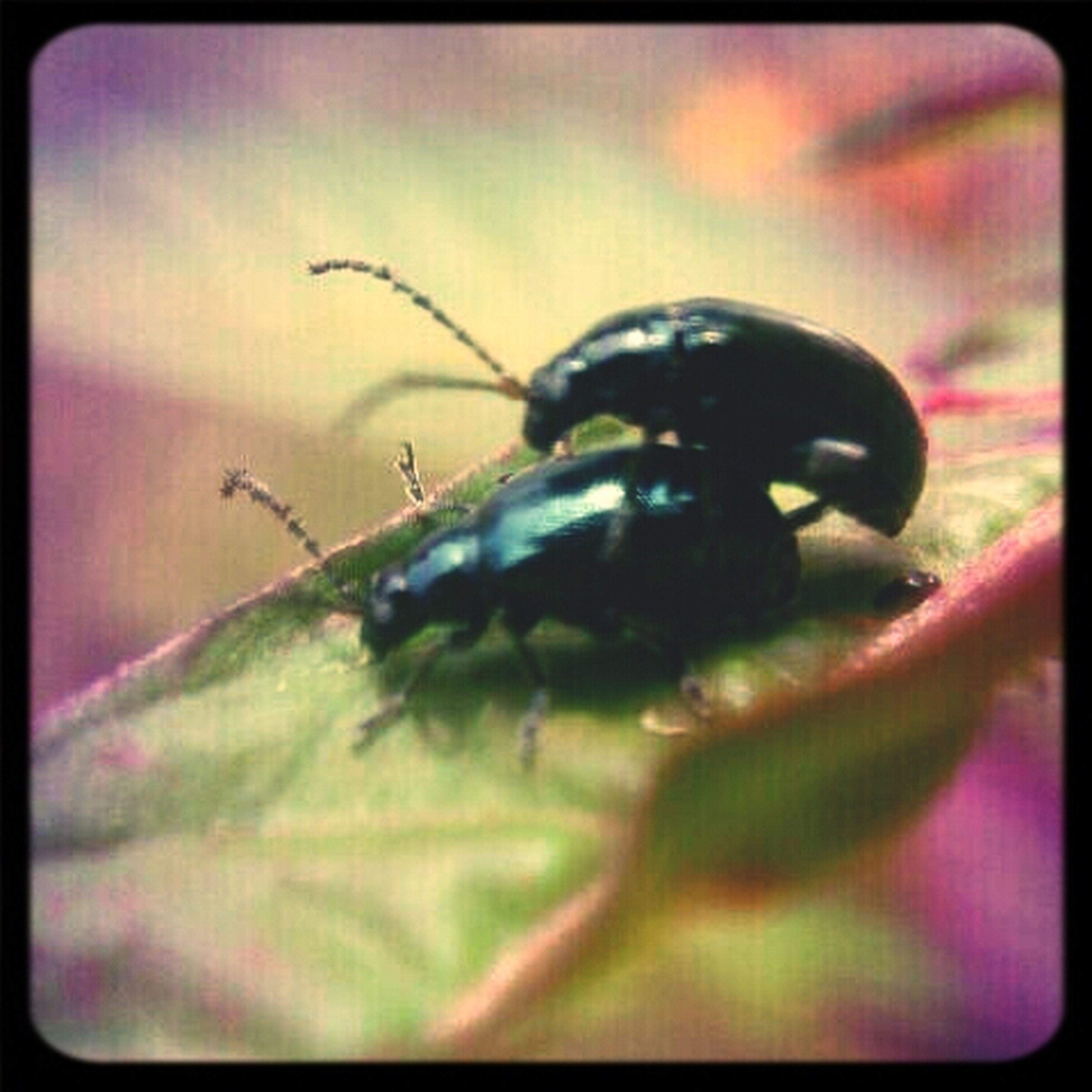 #macrophotography #bug #bugs #CapturedMoment