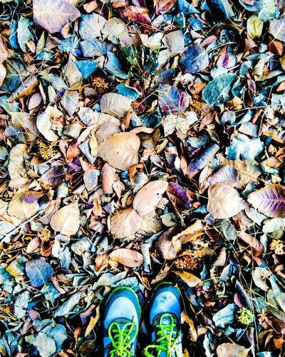 From Where I Stand Leaves Shoes Coloring Leaves Leaf Colors Nature Naturelovers Nature_collection Nature Photography