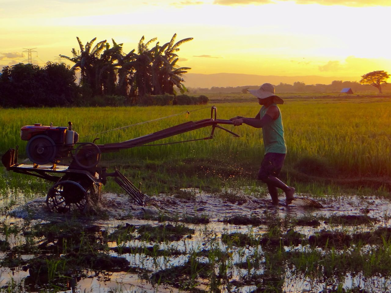 real people, sunset, field, nature, growth, agriculture, tree, sky, one person, full length, beauty in nature, outdoors, water, lifestyles, grass, scenics, working, irrigation equipment, rice paddy, day, young adult, people