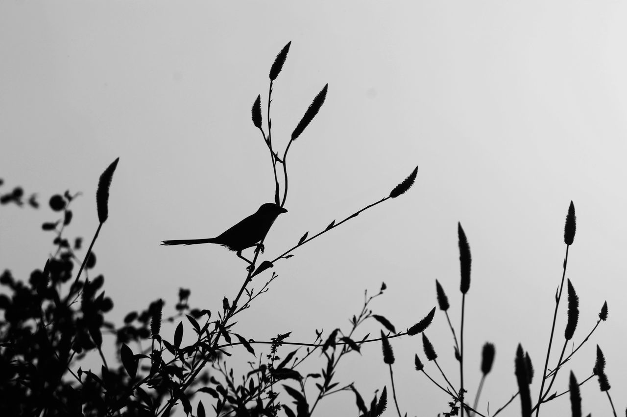 I thought monochrome was simply any click with lost colors...! But realized it's a new language in it's own xD Bare Tree Beauty In Nature Blackandwhite Clear Sky Day EyeEm EyeEm Best Edits EyeEm Best Shots EyeEm Best Shots - Black + White EyeEm Best Shots - Nature EyeEm Birds EyeEm Gallery EyeEm Nature Lover Grey Monochrome Nature No People Outdoors Plant Silhouette Sky Sunset
