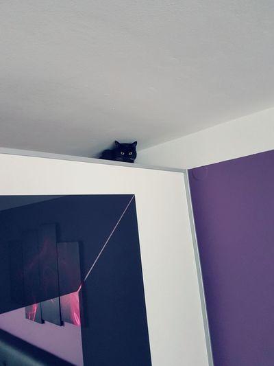 Pet Portraits Indoors  Cat Closet Hiding Black Cat