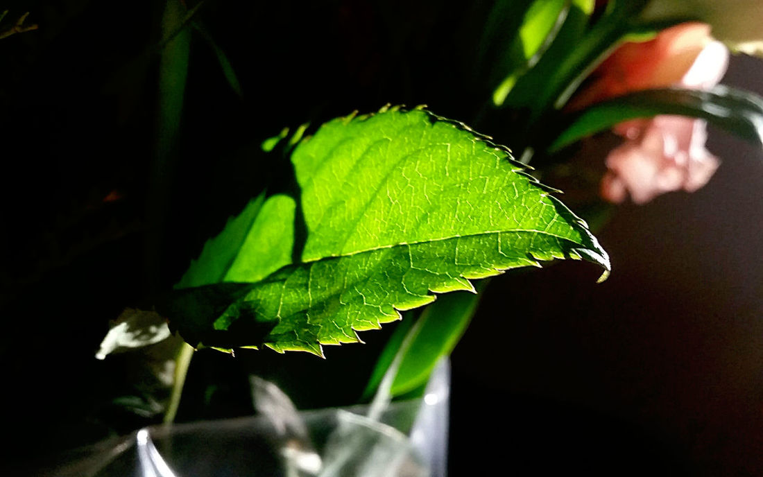 Letting the Sunshine in🍃🌞... GooodMorning! Greenery Green Leaves Leaf Veins Leaf Fantasy Silhouette Focus Point Showcase: February Winter Sun Sunnyday Perspective The Beauty In Simplicity Illuminated Pink Flower