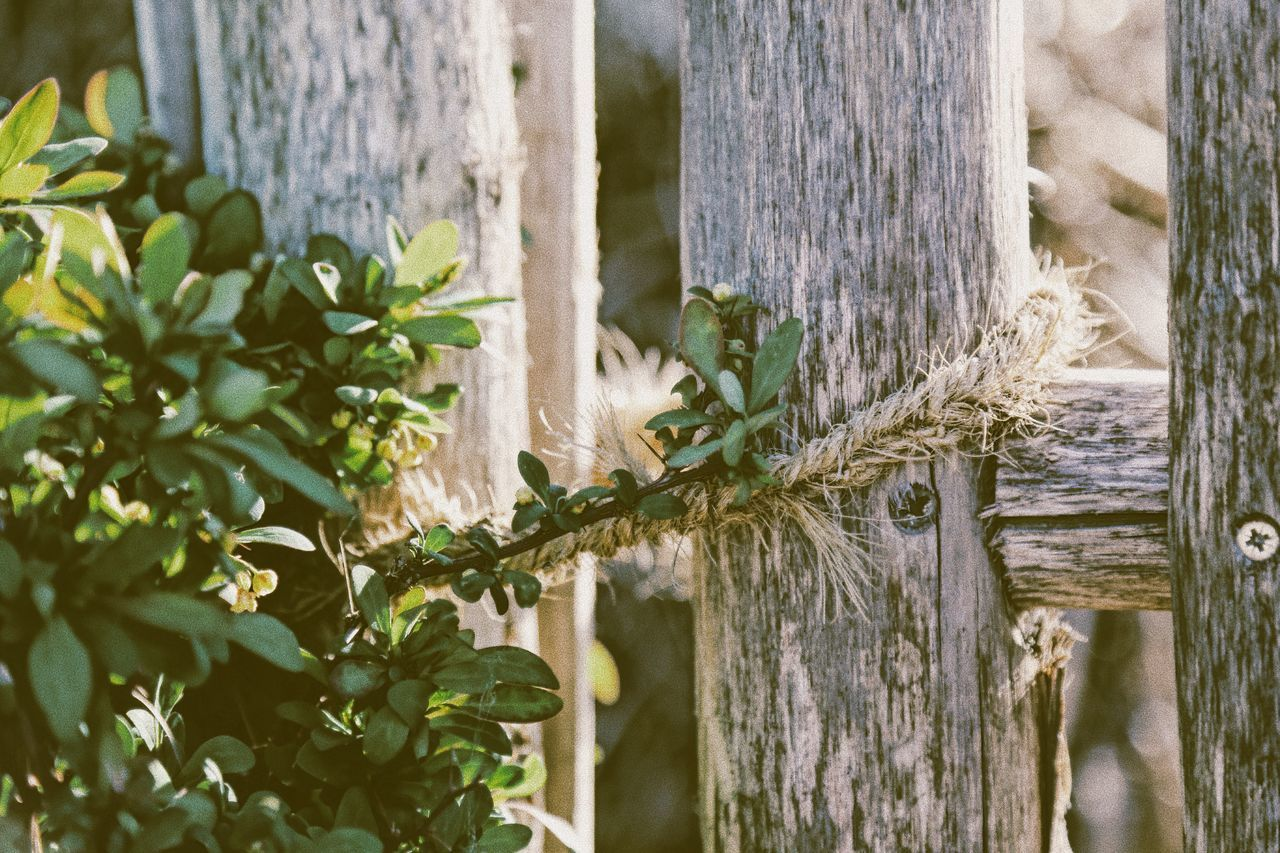 Plant Growth No People Nature Day Outdoors Architecture Beauty In Nature Close-up Countryside Handmade Details Of Nature Detail Idyllic Farm Life Rustic Charm Rustic Beauty Rustic Style Rope Fence Wooden Post Plant Farm Close Up Country Life