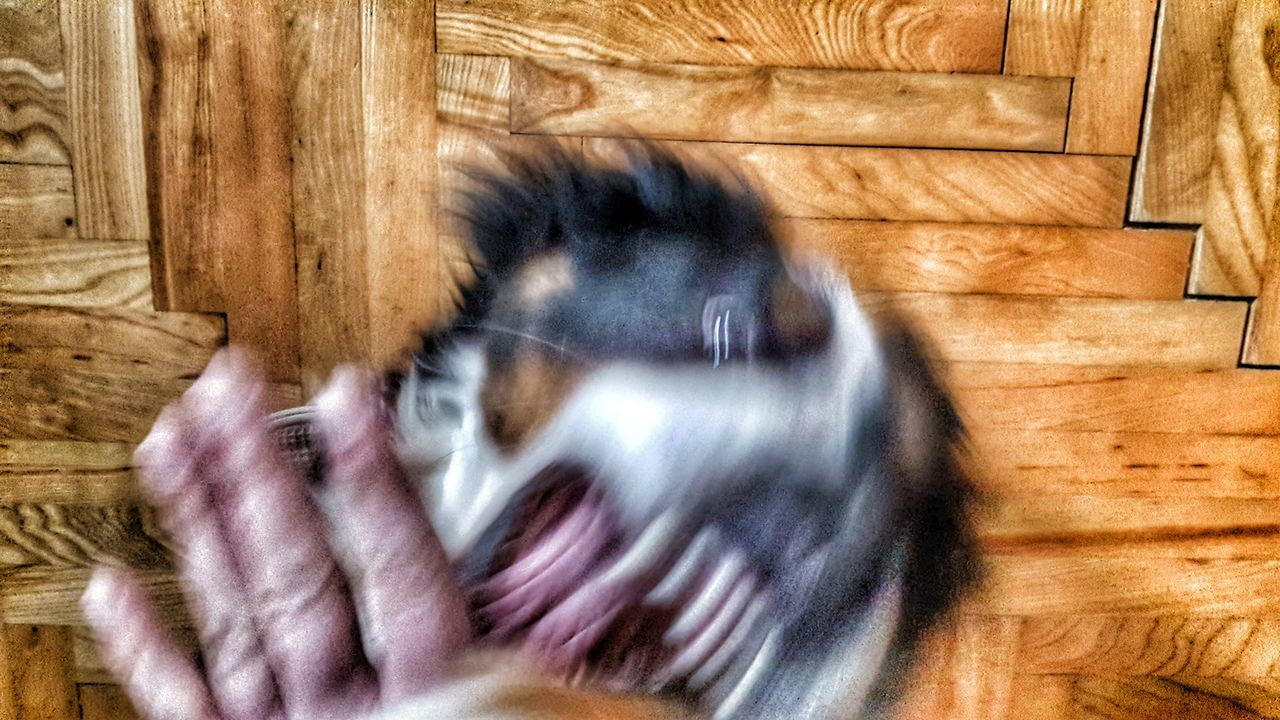 Photography In Motion Dog EyeEm Best Shots This Week On Eyeem Showcase:March HDR Photography Angry Dog Teeth Eye4photography  Motion Motionphotography Hdrphotography Amazing_captures Eyem Best Shots Animal Photography Moment Bite Blackandwhite Hund Bmd Bernese Mountain Dog Berner Home Wood