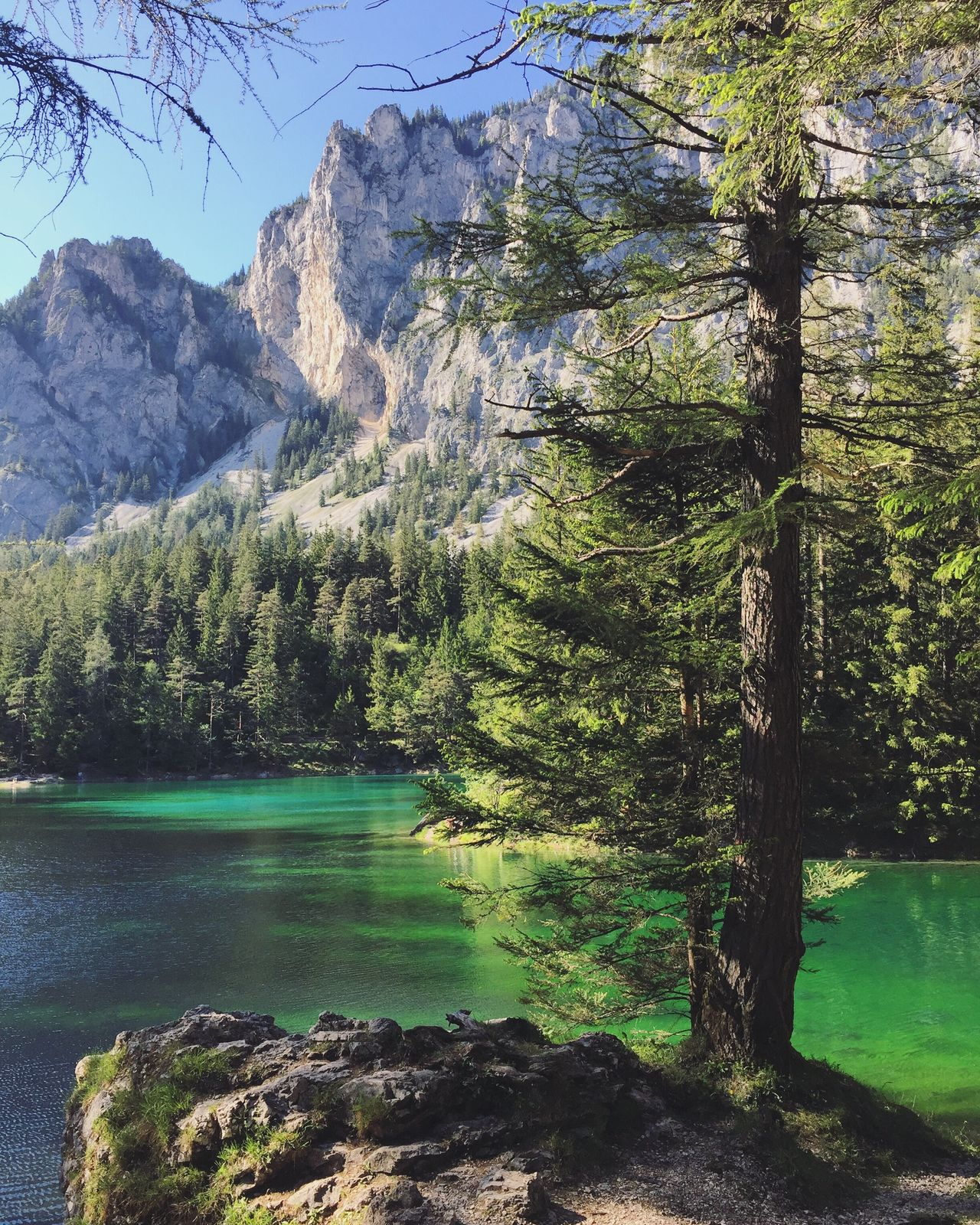 Tree Nature Scenics Mountain Beauty In Nature Lake Water Tranquility Forest Mountain Range Green Tranquil Scene Landscape