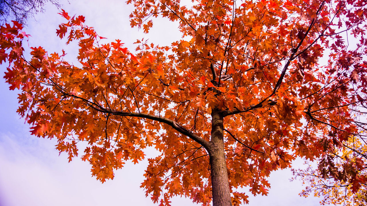 Autumn Autumn Leaves Beautiful Nature Beauty In Nature Leafs 🍃 Low Angle View Nature Nature Photography Sky Tranquility
