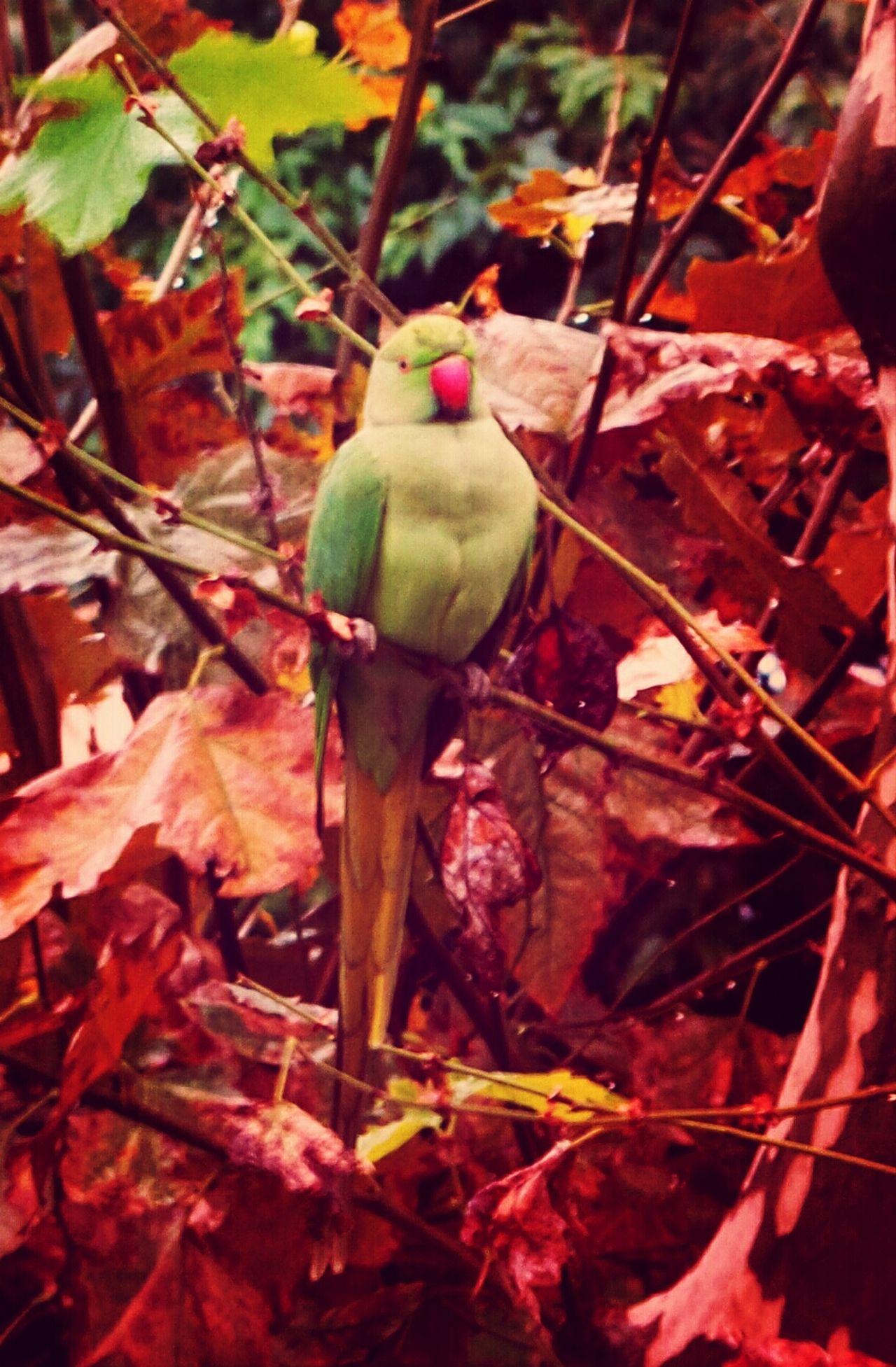 The View From My Window Amazing View Amazing_birds Vue De Ma Fenetre les pigeons ont bien changé cette année !