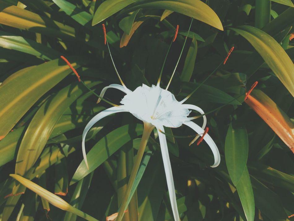Flower Flowers Exotic Vietnam Da Nang Hyatt Hyatt Regency Garden Close-up VSCO Vscogood Vscocam Summer