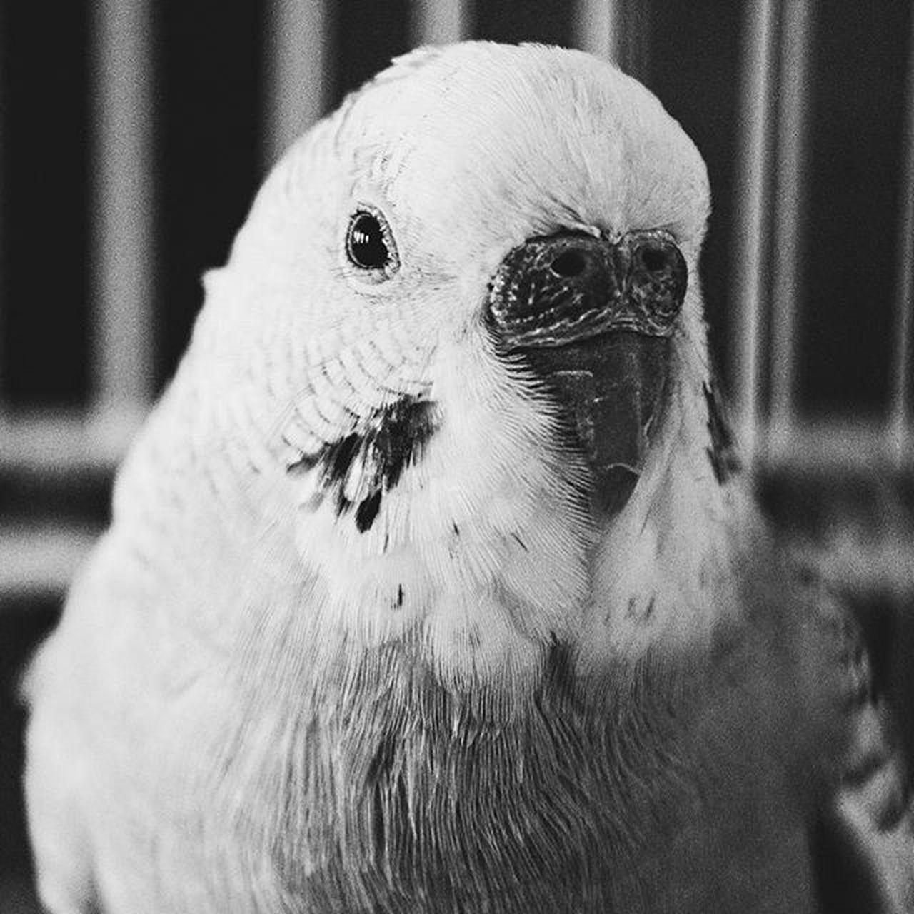 bird, close-up, animal themes, one animal, focus on foreground, no people, day, beak, animals in the wild, indoors, domestic animals, nature, mammal
